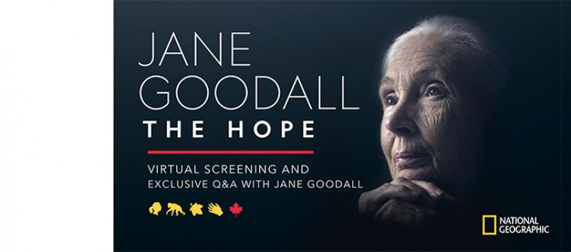 You're invited! Virtual event with Jane Goodall